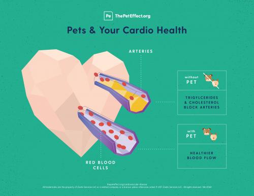 Pets & Your Cardio Health