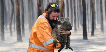 Adelaide wildlife rescuer Simon Adamczyk is seen with a koala rescued at a burning forest near Cape Borda on Kangaroo Island, southwest of Adelaide, Australia, January 7, 2020.   AAP Image/David Mariuz/via REUTERS    ATTENTION EDITORS - THIS IMAGE WAS PROVIDED BY A THIRD PARTY. NO RESALES. NO ARCHIVE. AUSTRALIA OUT. NEW ZEALAND OUT.     TPX IMAGES OF THE DAY - RC2TAE94MSRU