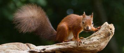 squirrel-441101