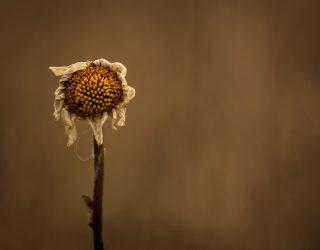 a_driedflower_2400